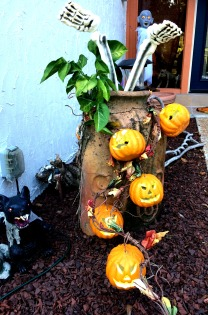 yard pumpkins