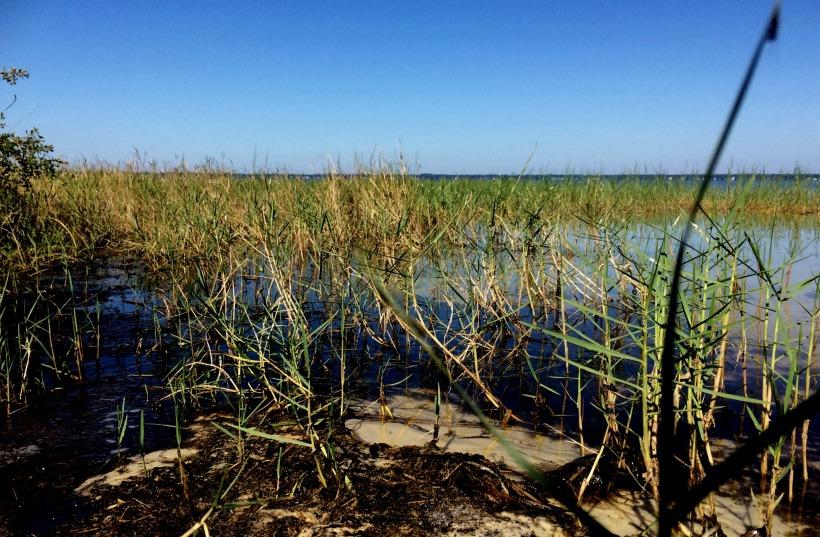 Lake Weird-grasses