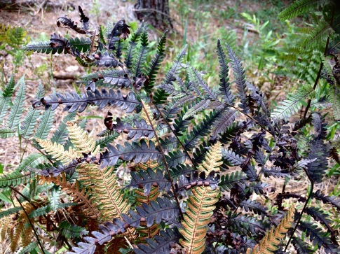 october-ferns-1